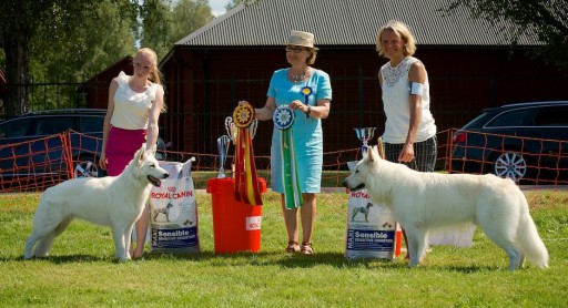 BIR och BIM Rasspecial 2014, vit herdehund